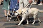 Guide dog