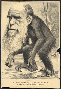 6 darwin